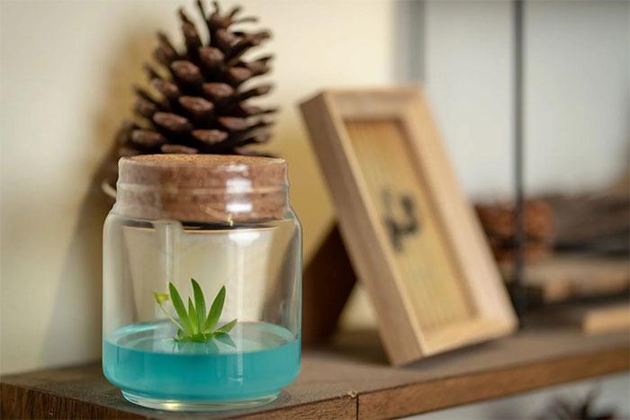 不用澆水室內療癒植物