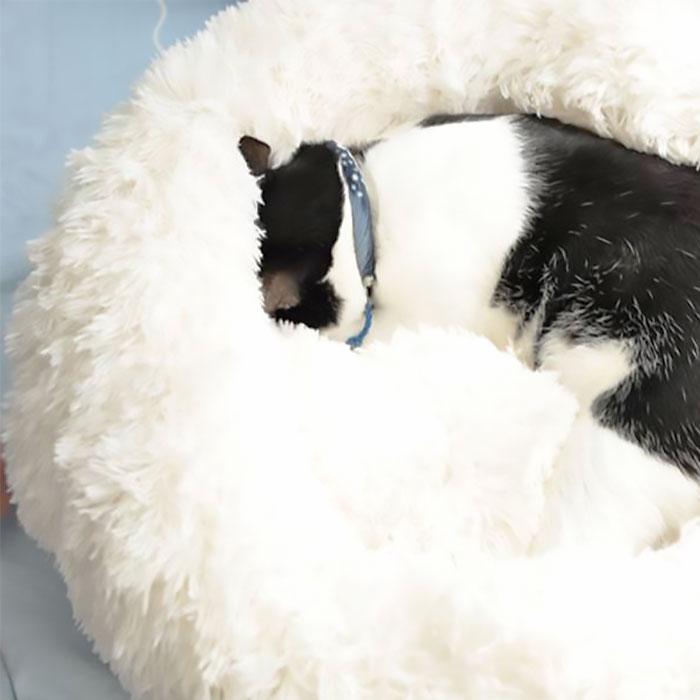 【深度睡眠貓窩】雲朵貓窩